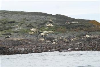 Papeyjarferðir_2